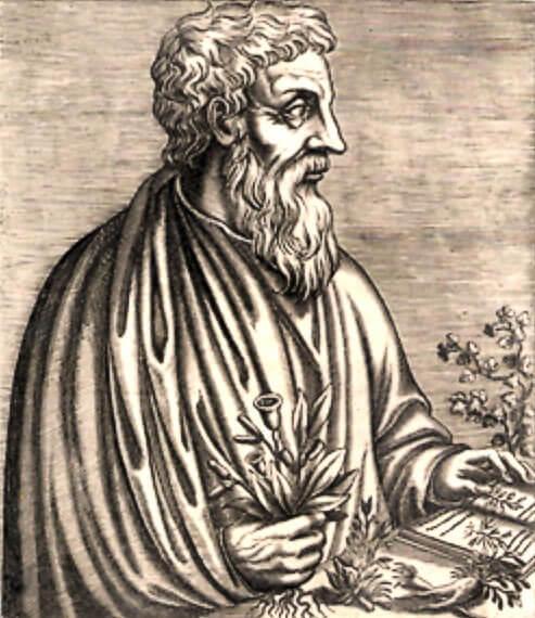 ディオスコリデスの画像